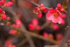 国産の干し梅が好きな方必見 ~6月6日は梅の日~